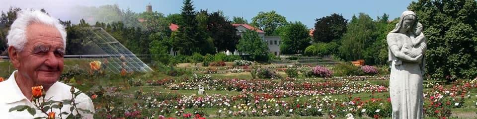 A rózsanemesítés magyar vonatkozásai