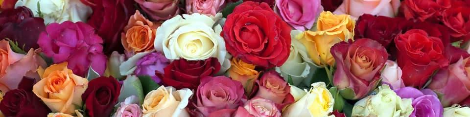 Rózsák csoportosítása