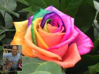 Egypercesek a rózsáról - Rainbow Rose